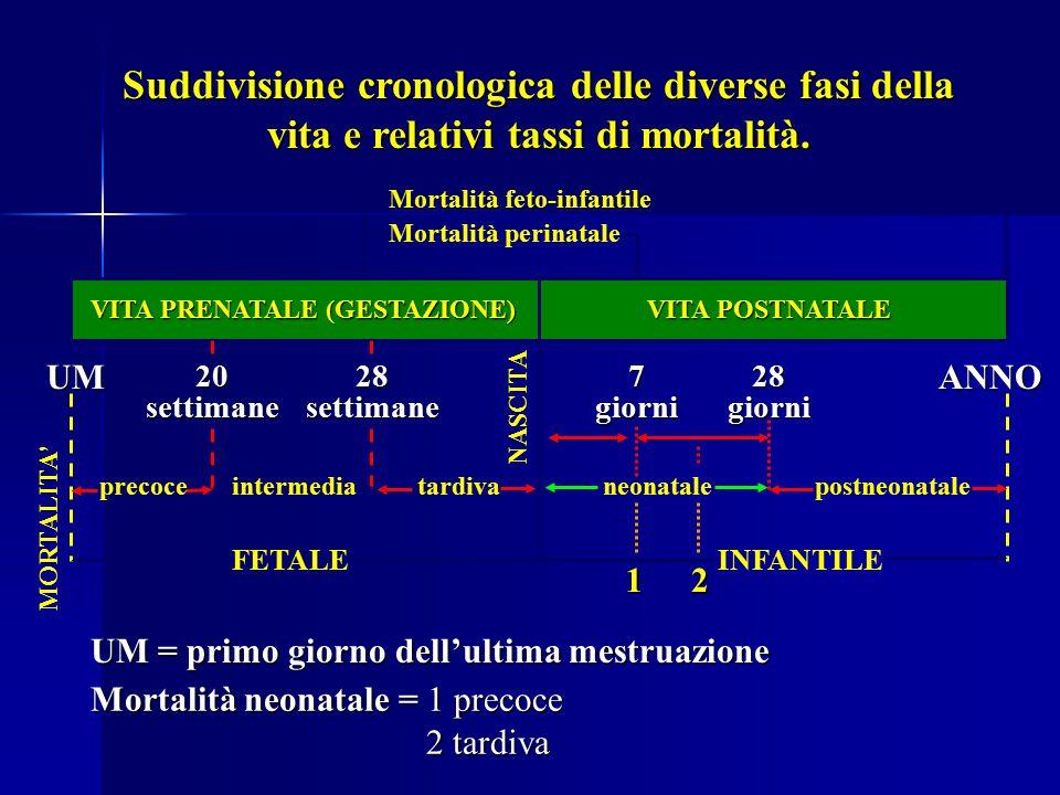 Suddivisione cronologica delle diverse fasi della vita e relativi tassi di mortalità.