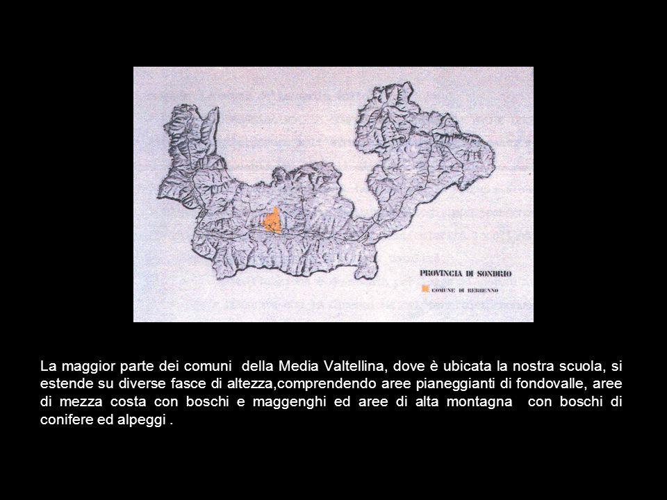 La maggior parte dei comuni della Media Valtellina, dove è ubicata la nostra scuola, si estende su diverse fasce di altezza,comprendendo aree pianeggianti di fondovalle, aree di mezza costa con boschi e maggenghi ed aree di alta montagna con boschi di conifere ed alpeggi .
