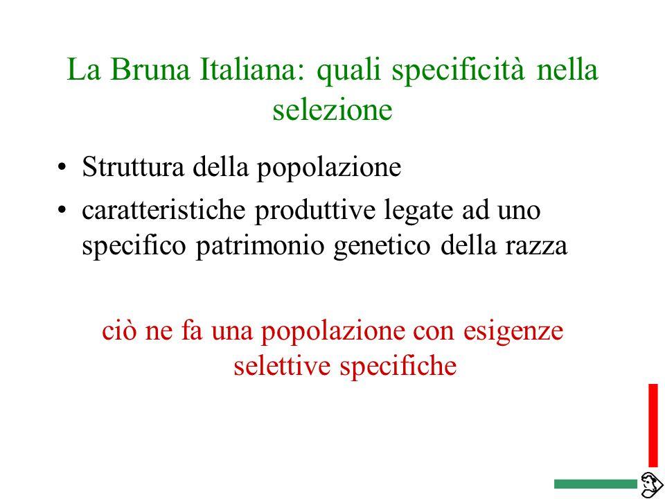 La Bruna Italiana: quali specificità nella selezione