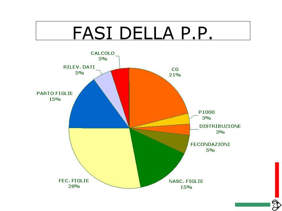 FASI DELLA P.P.