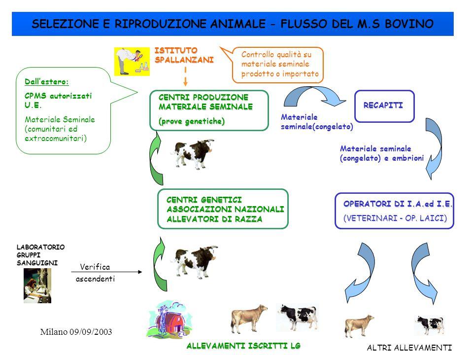 SELEZIONE E RIPRODUZIONE ANIMALE - FLUSSO DEL M.S BOVINO