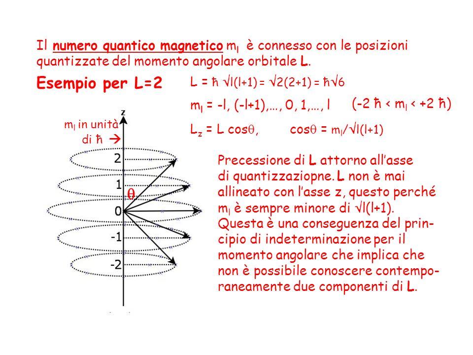 Il numero quantico magnetico ml è connesso con le posizioni quantizzate del momento angolare orbitale L.
