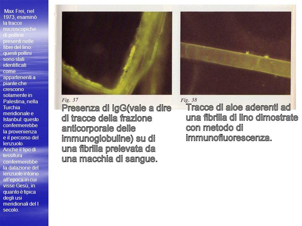 Max Frei, nel 1973, esaminò la tracce microscopiche di polline presenti nelle fibre del lino: questi pollini sono stati identificati come appartenenti a piante che crescono solamente in Palestina, nella Turchia meridionale e Istanbul: questo confermerebbe la provenienza e il percorso del lenzuolo.