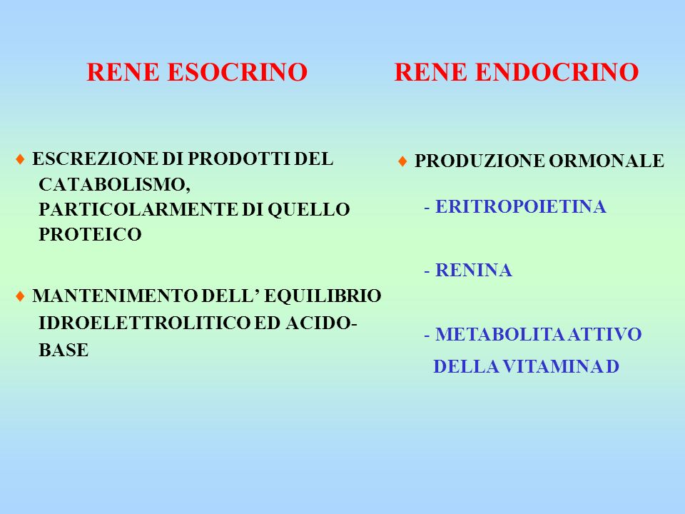 RENE ESOCRINO RENE ENDOCRINO