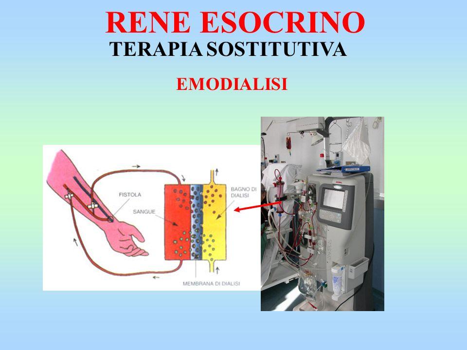 RENE ESOCRINO TERAPIA SOSTITUTIVA EMODIALISI