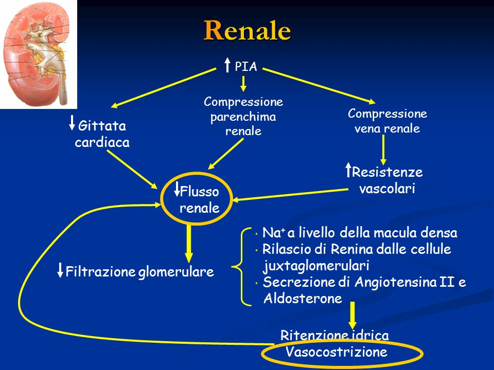 Renale Gittata cardiaca Resistenze vascolari Flusso renale