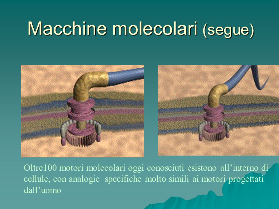 Macchine molecolari (segue)