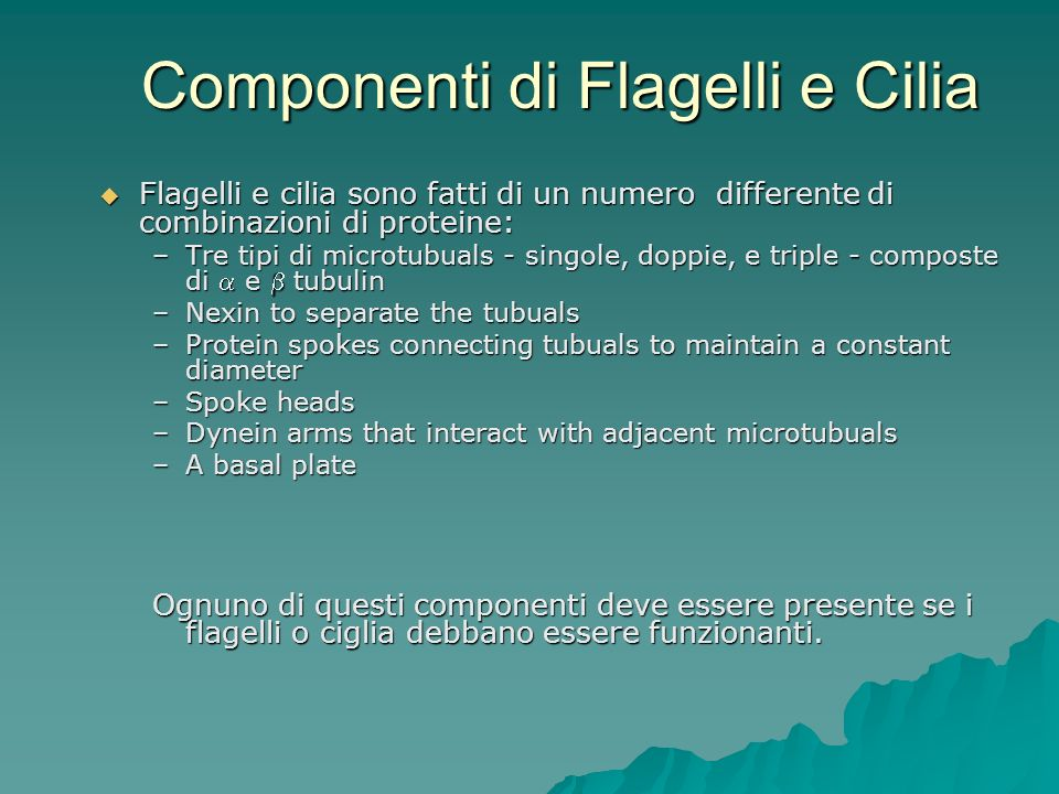 Componenti di Flagelli e Cilia