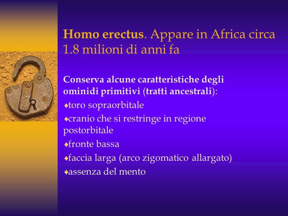 Homo erectus. Appare in Africa circa 1.8 milioni di anni fa