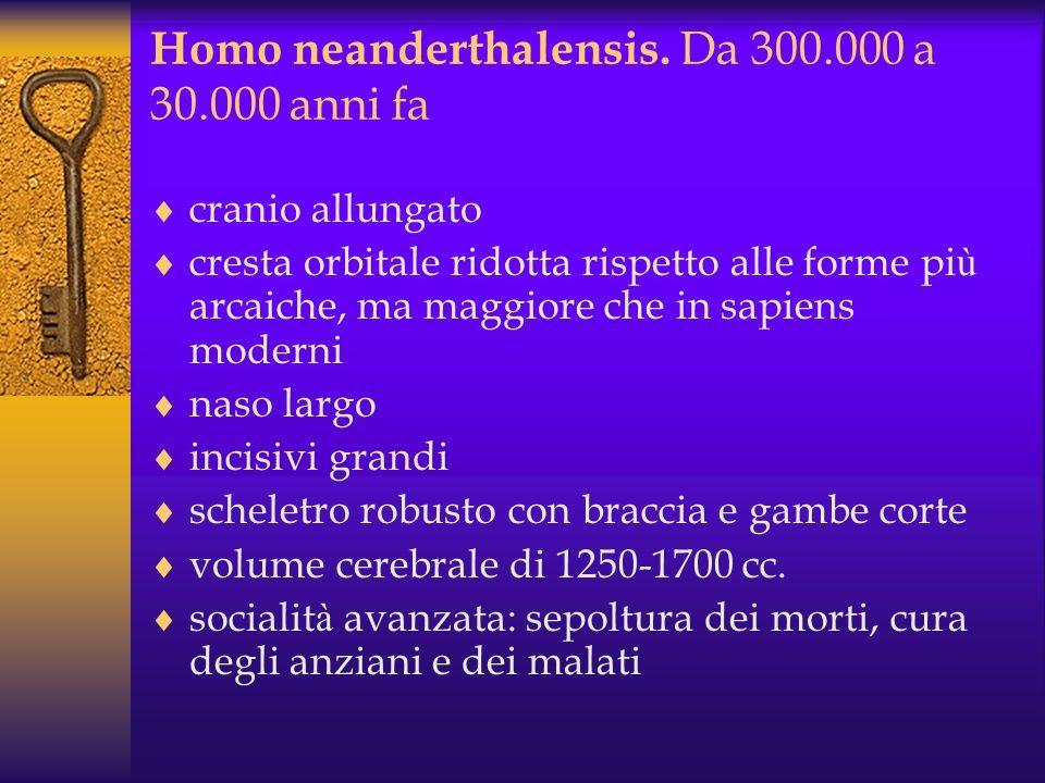 Homo neanderthalensis. Da 300.000 a 30.000 anni fa