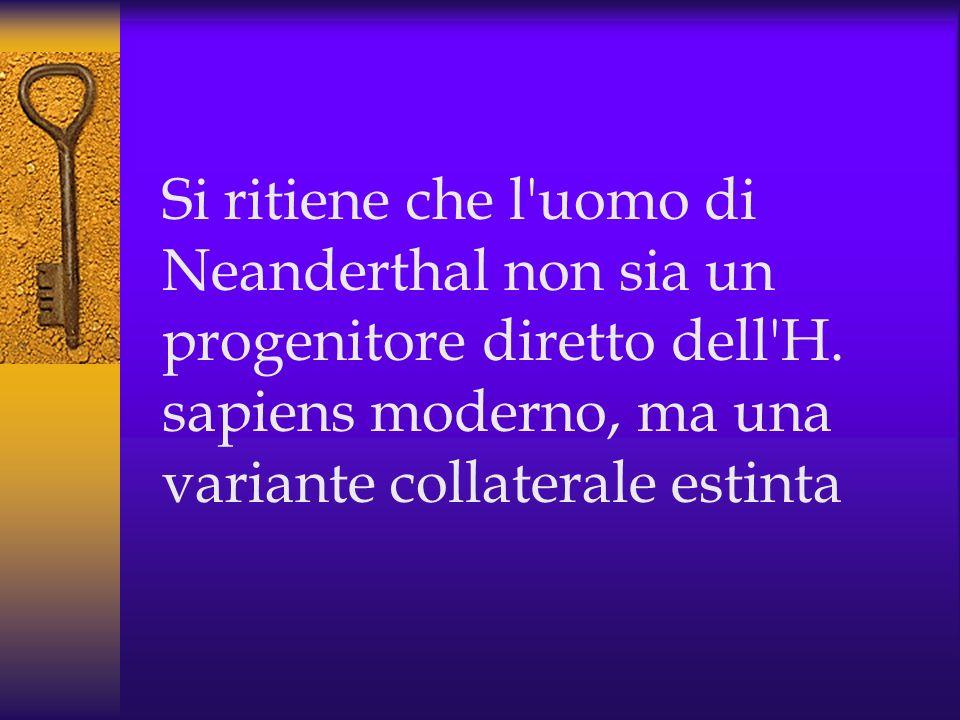 Si ritiene che l uomo di Neanderthal non sia un progenitore diretto dell H.