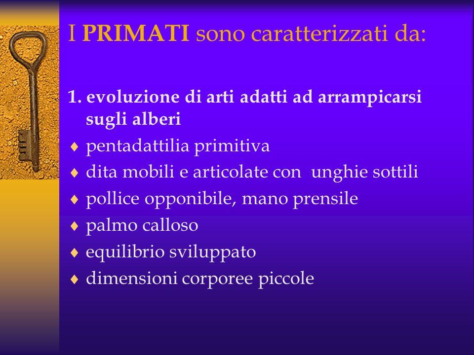 I PRIMATI sono caratterizzati da: