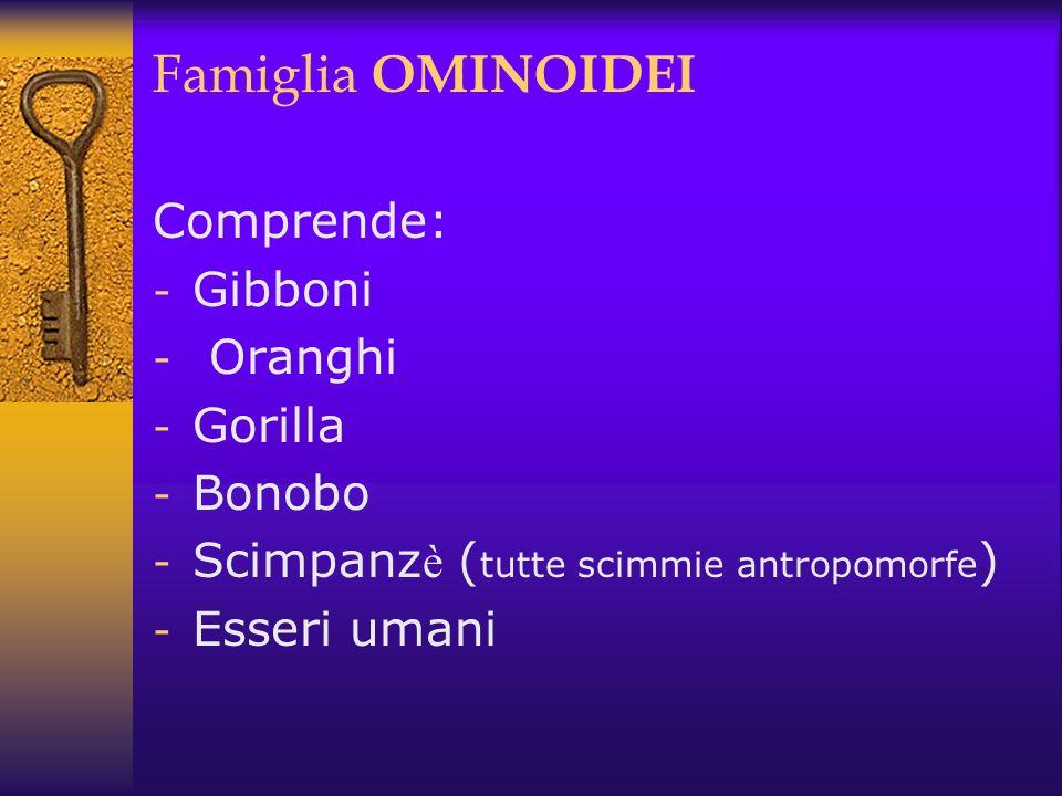Famiglia OMINOIDEI Comprende: Gibboni Oranghi Gorilla Bonobo