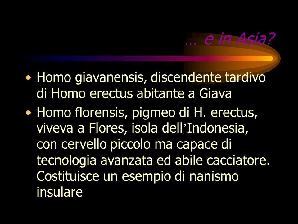 … e in Asia Homo giavanensis, discendente tardivo di Homo erectus abitante a Giava.