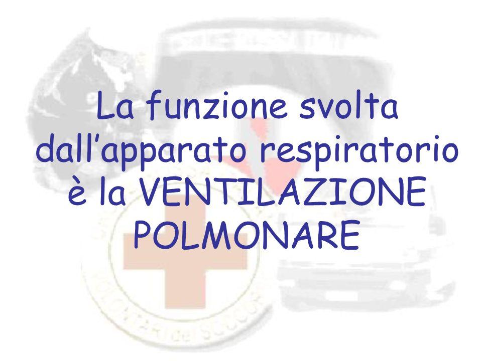 La funzione svolta dall'apparato respiratorio è la VENTILAZIONE POLMONARE