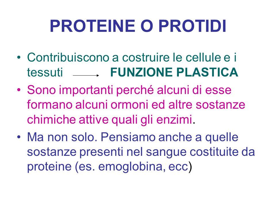 PROTEINE O PROTIDI Contribuiscono a costruire le cellule e i tessuti FUNZIONE PLASTICA.