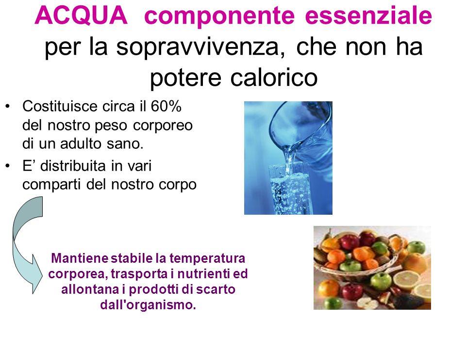 ACQUA componente essenziale per la sopravvivenza, che non ha potere calorico