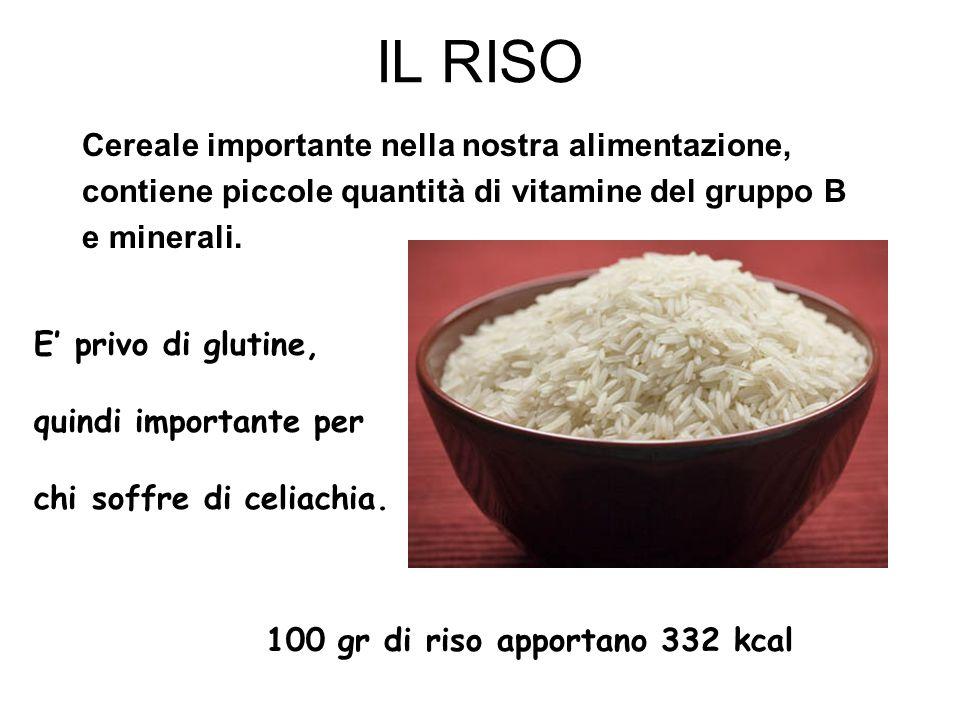 IL RISO Cereale importante nella nostra alimentazione,