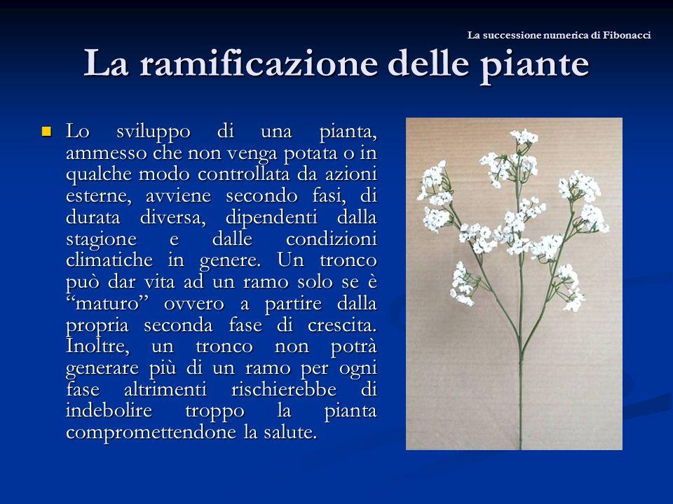 La ramificazione delle piante