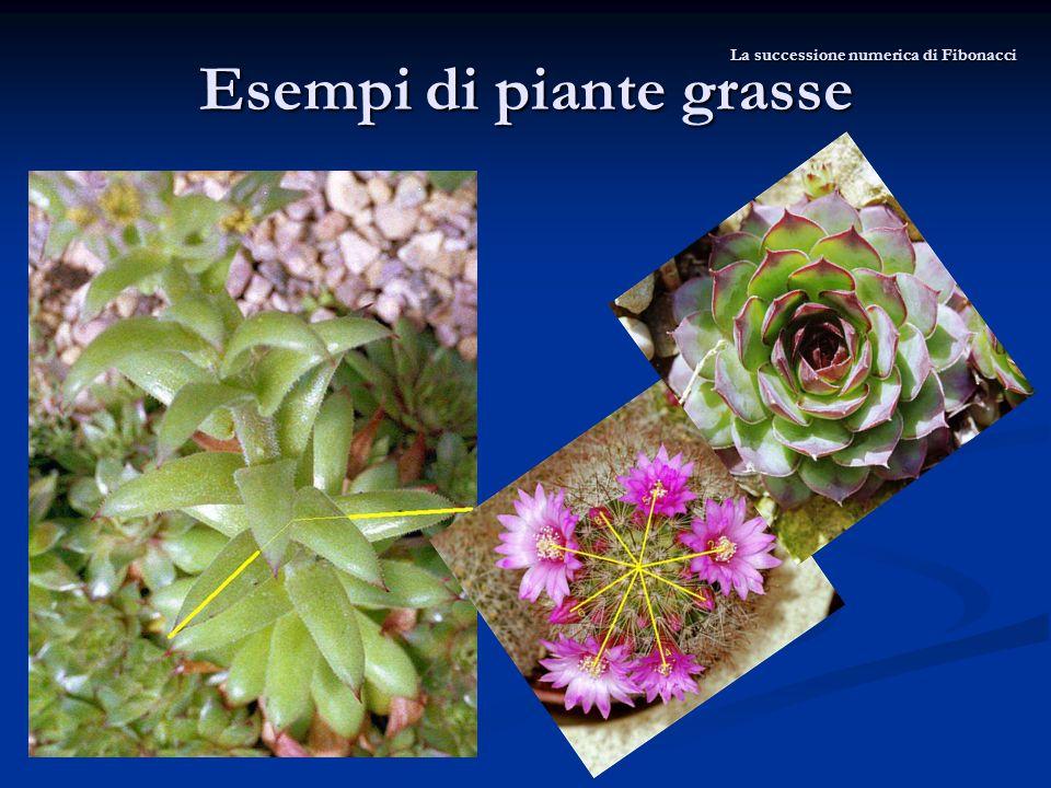 Esempi di piante grasse