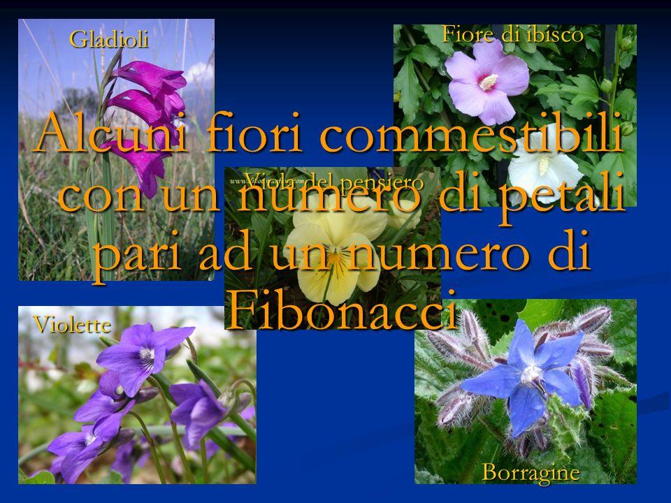 Fiore di ibisco Gladioli. Alcuni fiori commestibili con un numero di petali pari ad un numero di Fibonacci.