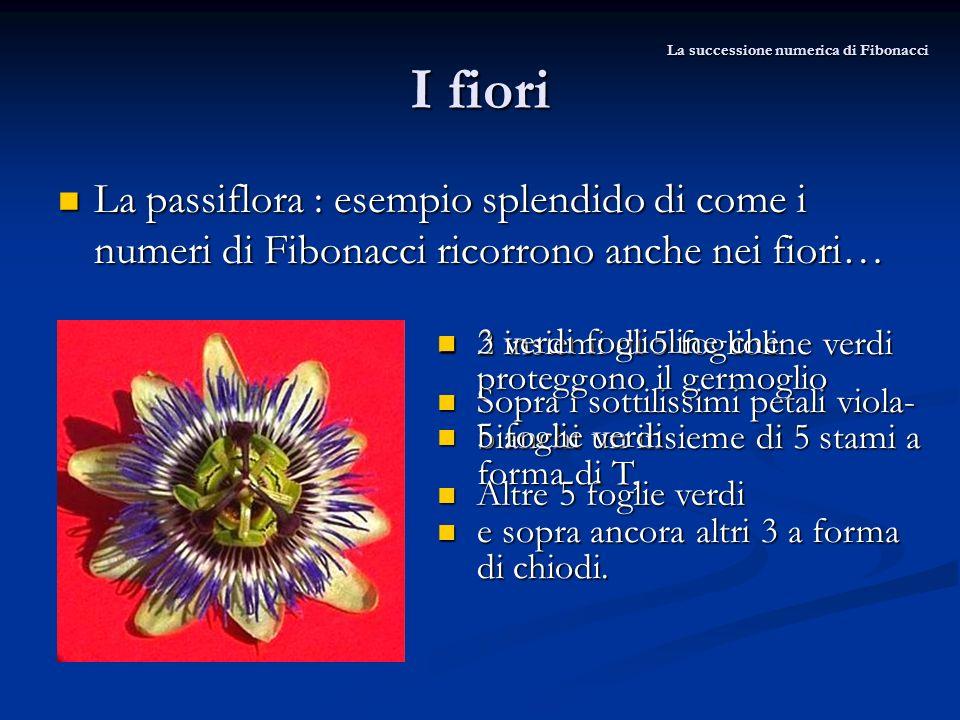 La successione numerica di Fibonacci