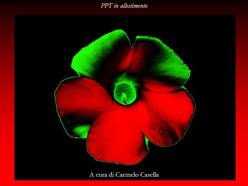 A cura di Carmelo Casella