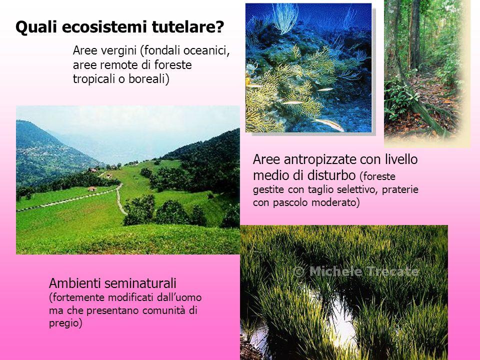 Quali ecosistemi tutelare