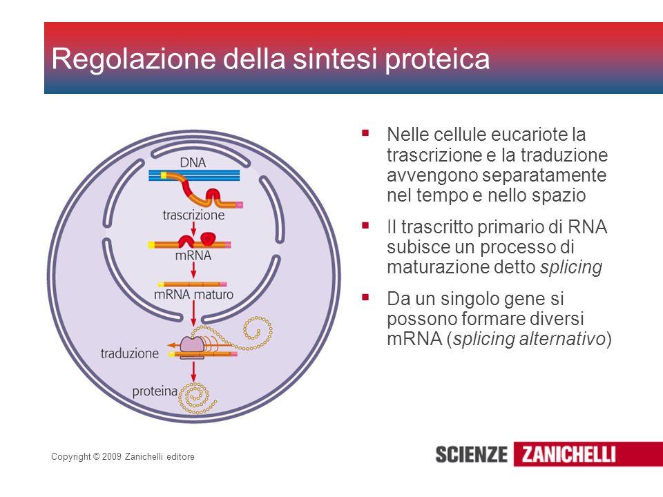 Regolazione della sintesi proteica