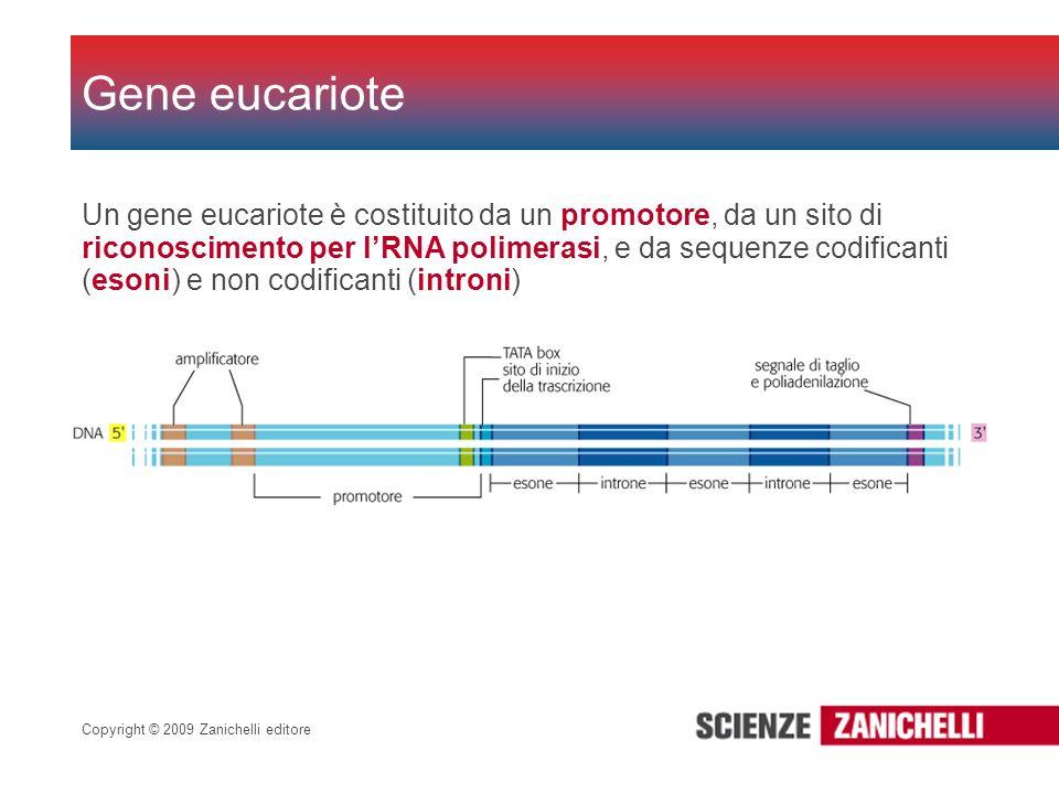 Gene eucariote