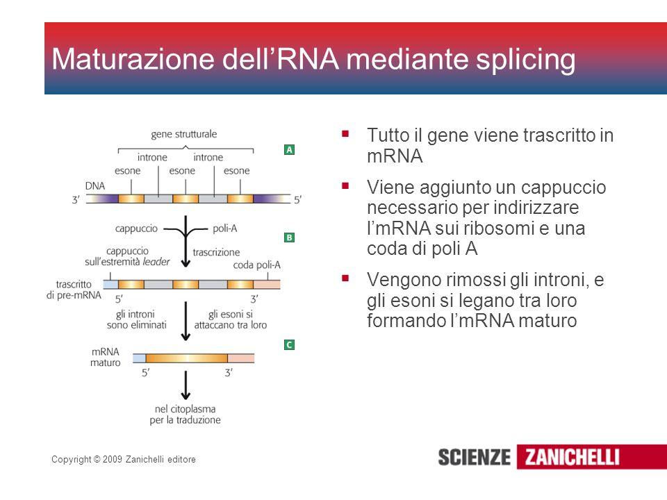 Maturazione dell'RNA mediante splicing