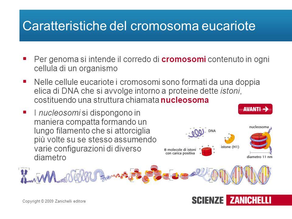 Caratteristiche del cromosoma eucariote
