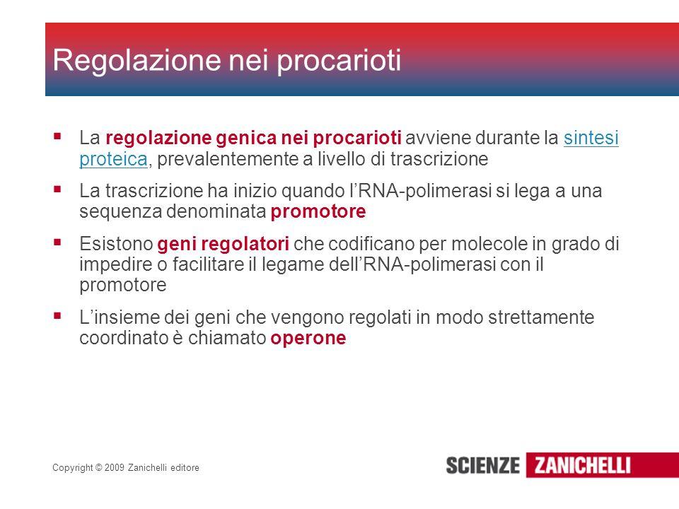 Regolazione nei procarioti