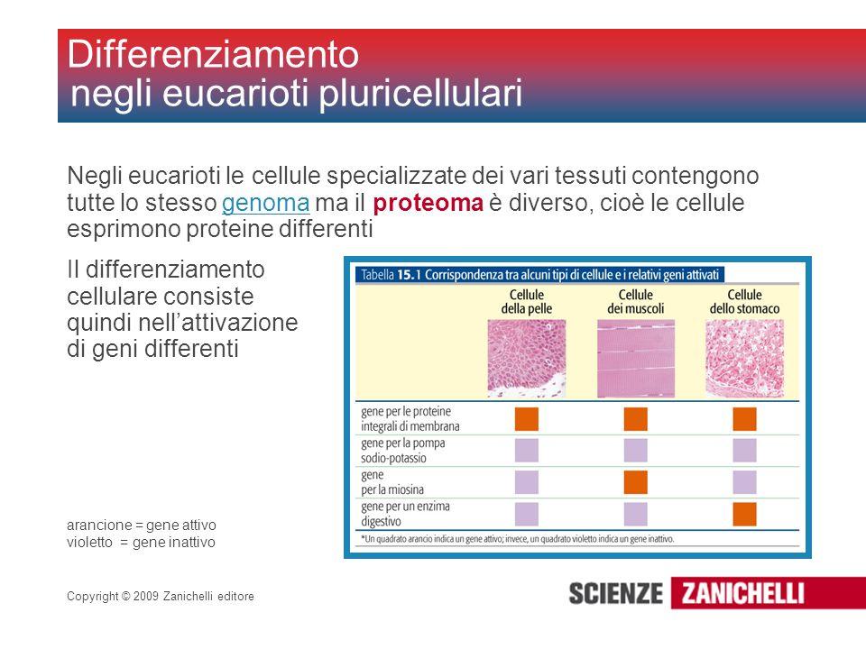 Differenziamento negli eucarioti pluricellulari
