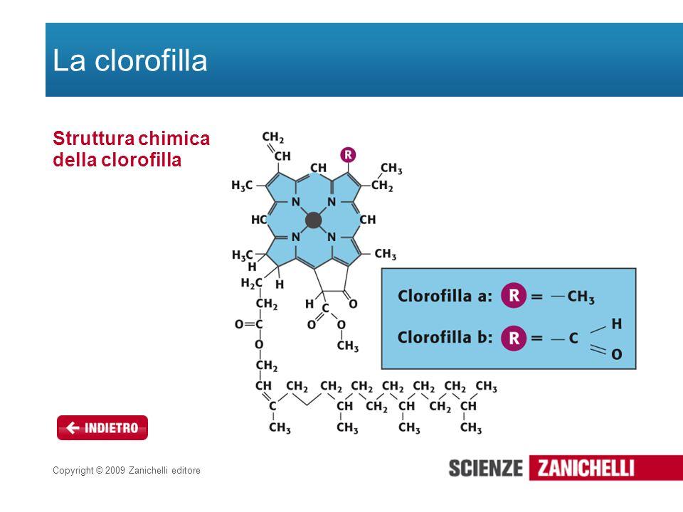 Struttura chimica della clorofilla