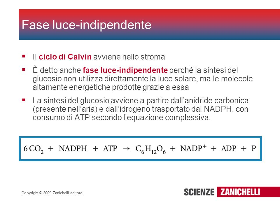 Fase luce-indipendente