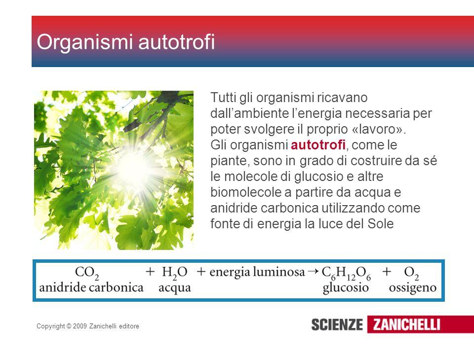 Organismi autotrofiTutti gli organismi ricavano dall'ambiente l'energia necessaria per poter svolgere il proprio «lavoro».