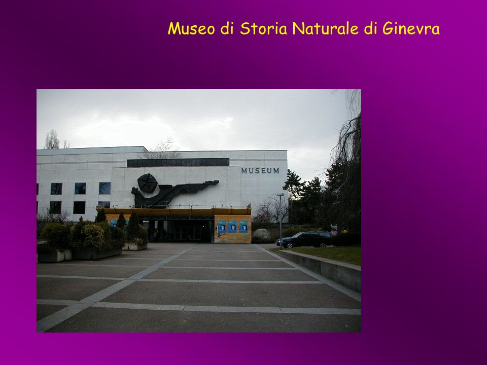 Museo di Storia Naturale di Ginevra