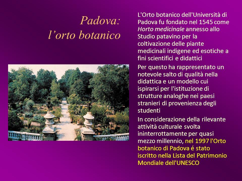 Padova: l'orto botanico