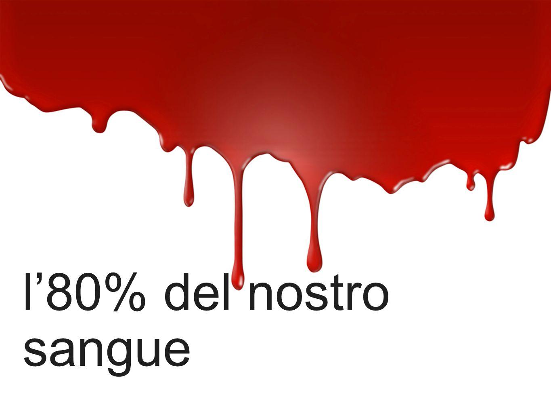l'80% del nostro sangue