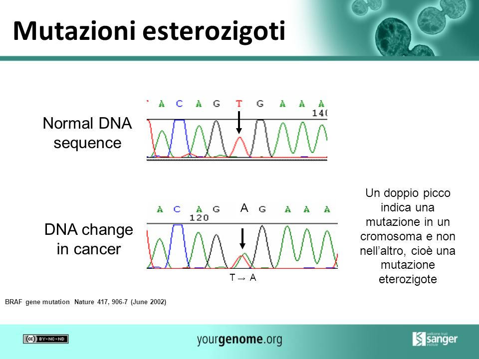 Mutazioni esterozigoti