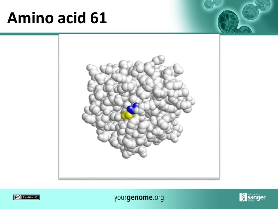 Amino acid 61