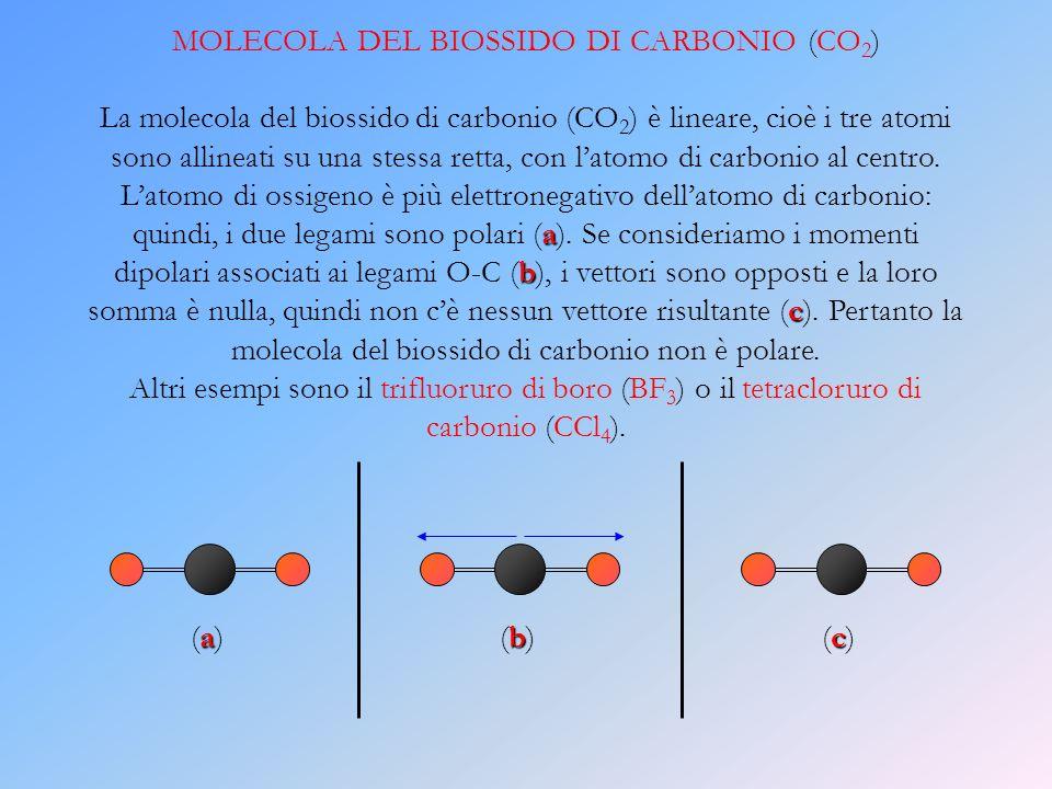MOLECOLA DEL BIOSSIDO DI CARBONIO (CO2)