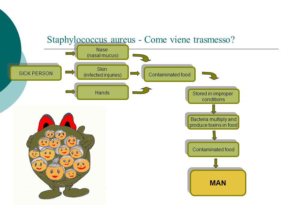 Staphylococcus aureus - Come viene trasmesso