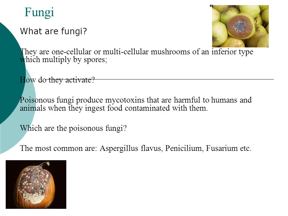Fungi What are fungi They are one-cellular or multi-cellular mushrooms of an inferior type which multiply by spores;