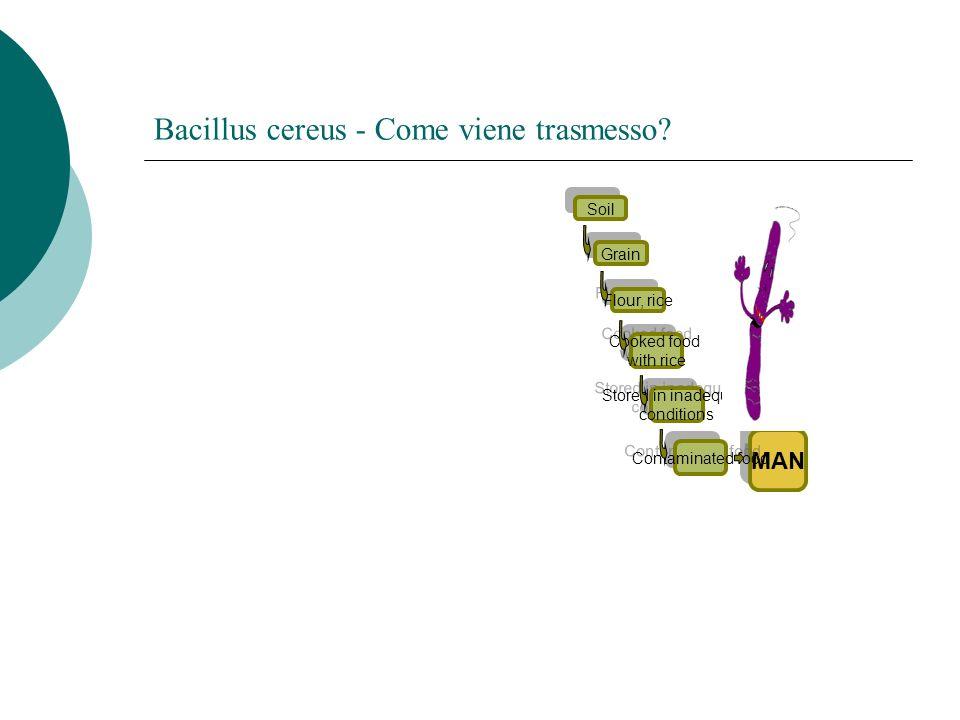 Bacillus cereus - Come viene trasmesso