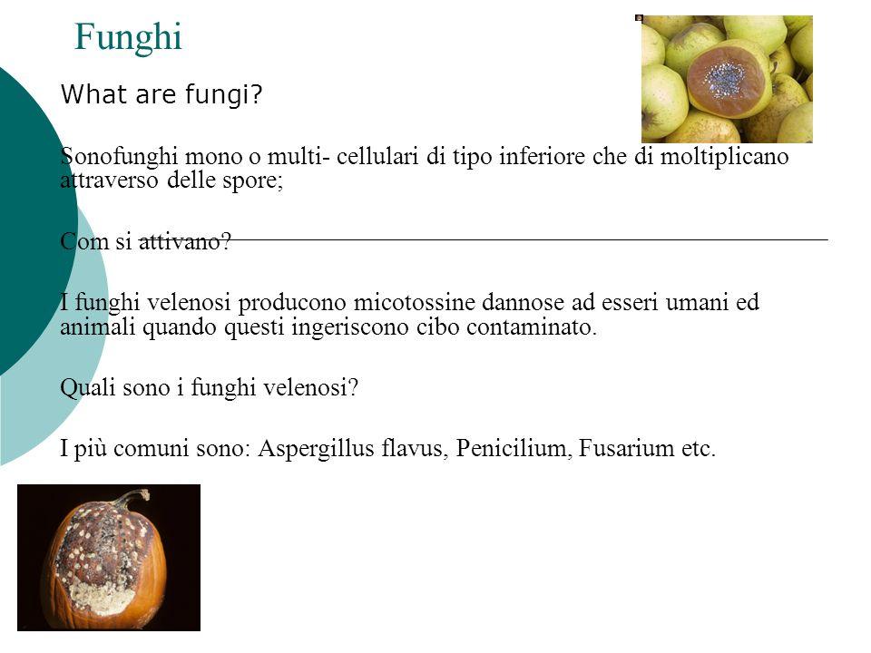 Funghi What are fungi Sonofunghi mono o multi- cellulari di tipo inferiore che di moltiplicano attraverso delle spore;