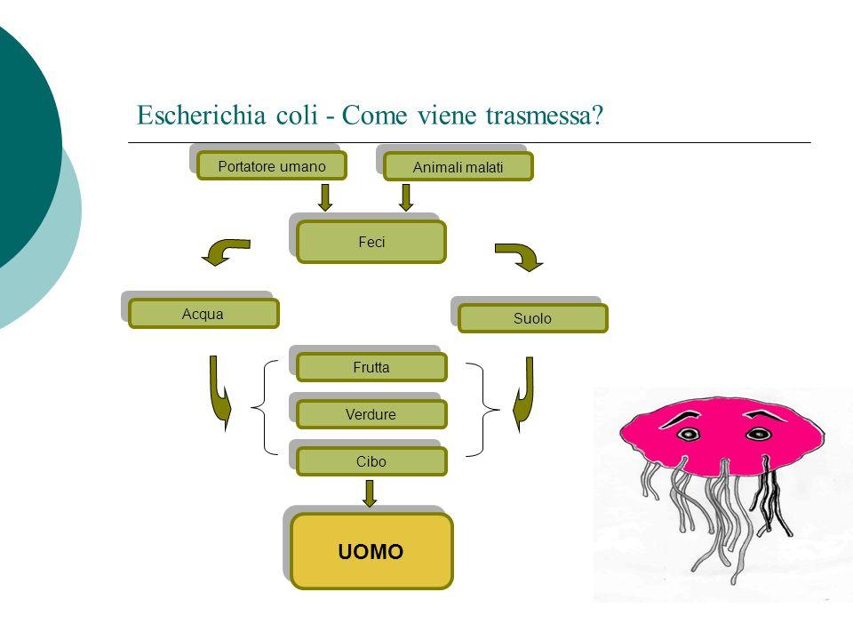 Escherichia coli - Come viene trasmessa