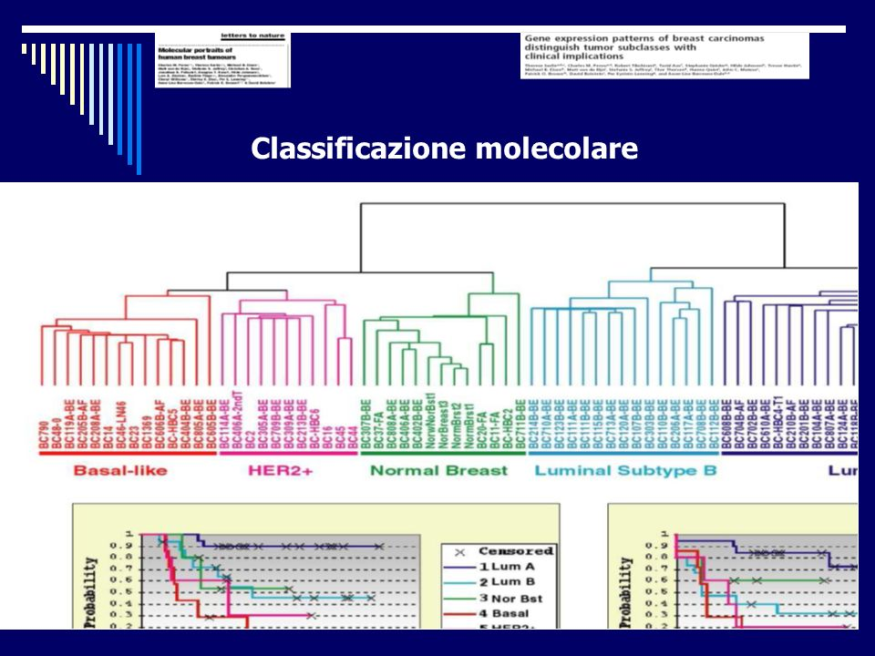 Classificazione molecolare