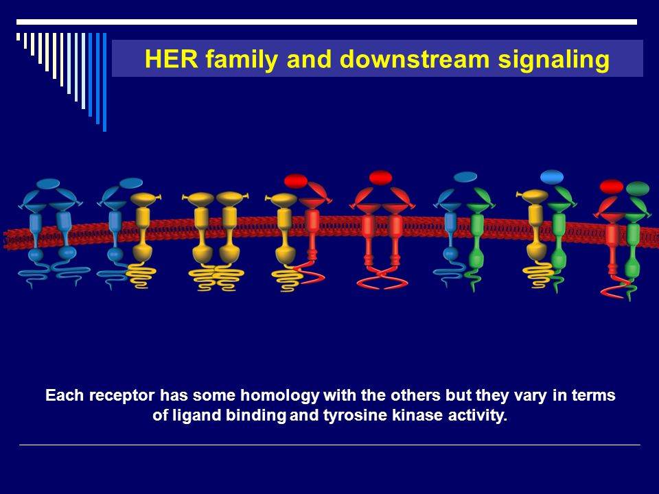 HER family and downstream signaling